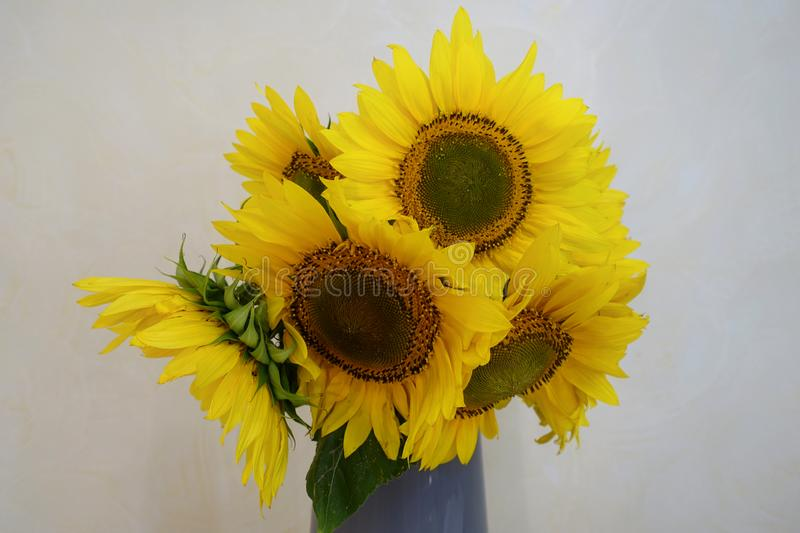 bouquet of sunflowers in a vase stock images