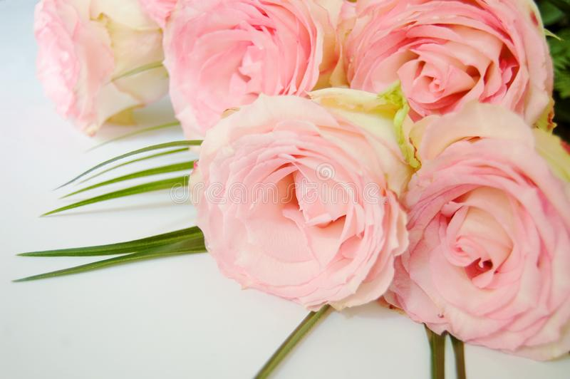 Bouquet of tender pink roses lying stock photography