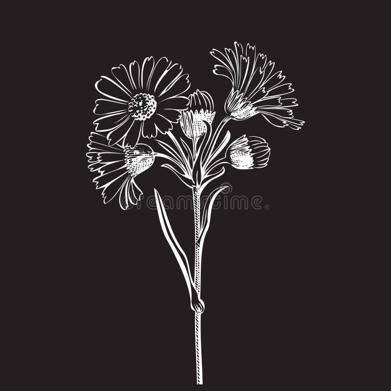 Bouquet tiré par la main des fleurs de marguerite d'isolement sur le fond blanc illustration stock