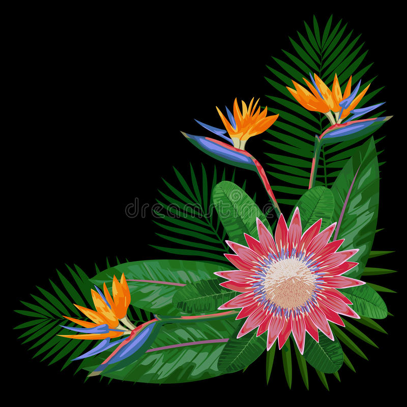 Bouquet tropical CornerComposition illustration libre de droits