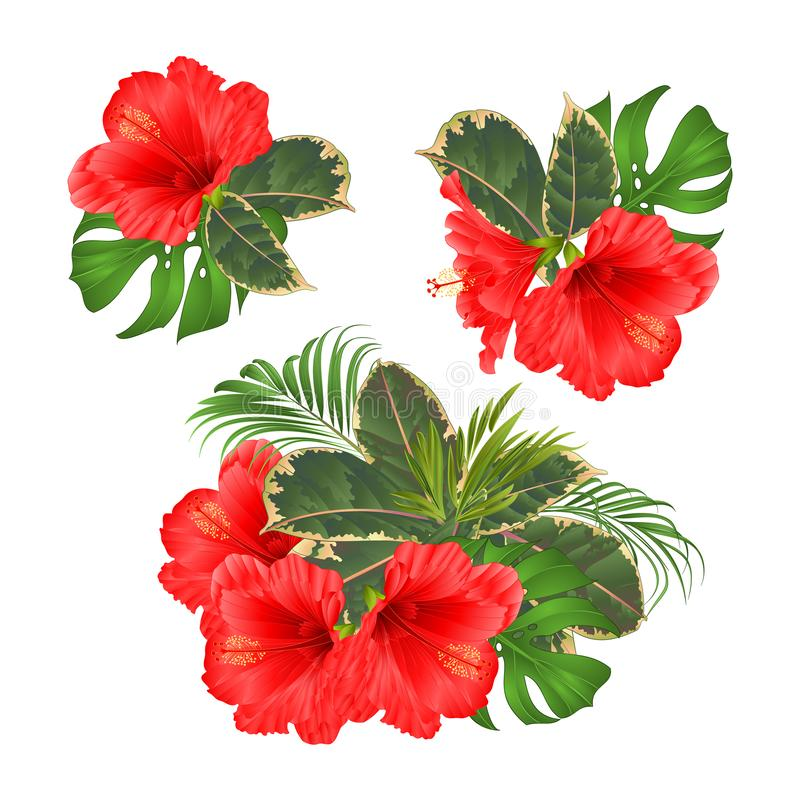 Bouquet with tropical flowers set floral arrangement with beautiful red hibiscus palm,philodendron and ficus vintage vector illus stock illustration