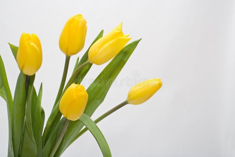 Bouquet Tulip royalty free stock photo
