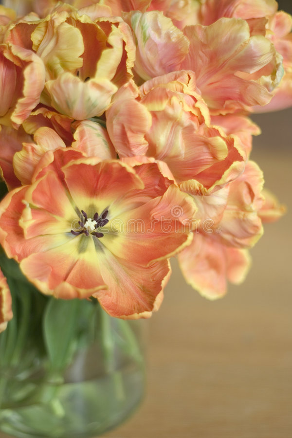 Download Bouquet Of Tulips Stock Image - Image: 604691