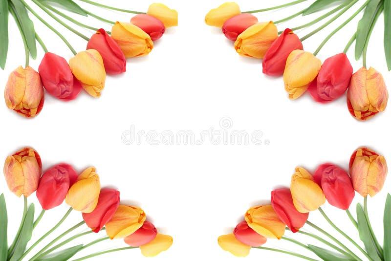 Bouquet of tulips border or frame stock photos