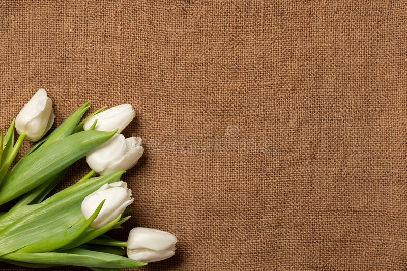 Bouquet of tulips on burlap background, frame border, flat lay royalty free stock photography