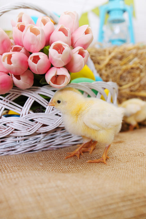 Bouquet of tulips and chicken. Small chicken on a haystack, easter still life stock photography