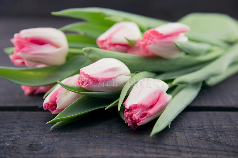 Bouquet of Tulips on dark rustic wooden background. Spring flowe. Rs. Greeting card for Valentine`s Day, Woman`s Day and Mother`s Day holidays. Soft focus stock photo