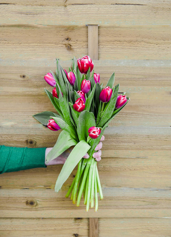Bouquet of tulips in hand on wooden background stock images