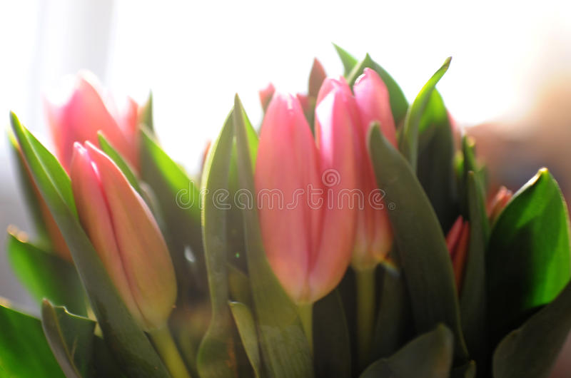 Bouquet of tulips i royalty free stock photos