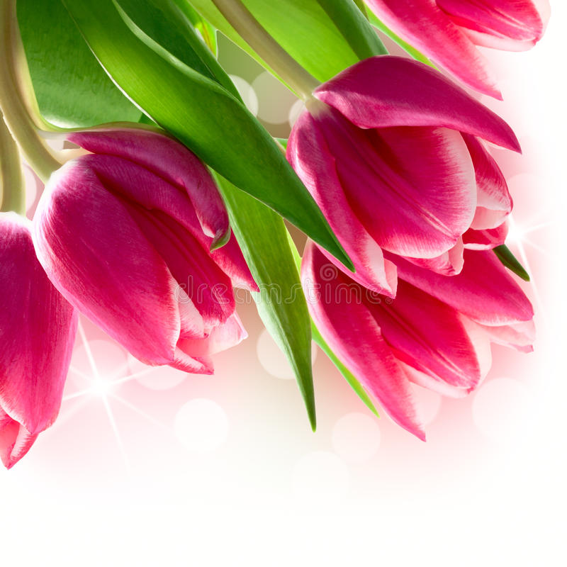 Download Bouquet of tulips stock photo. Image of rose, gift, nature - 39501854