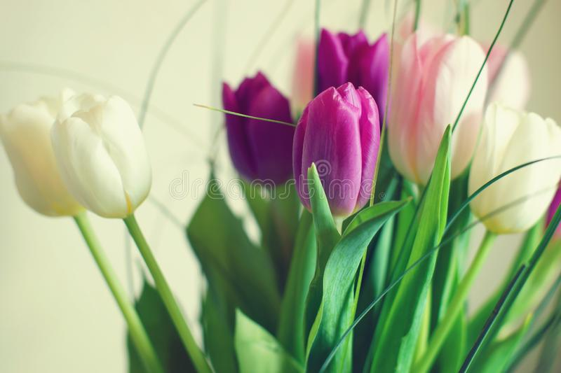 A bouquet of tulips in three colors royalty free stock photo