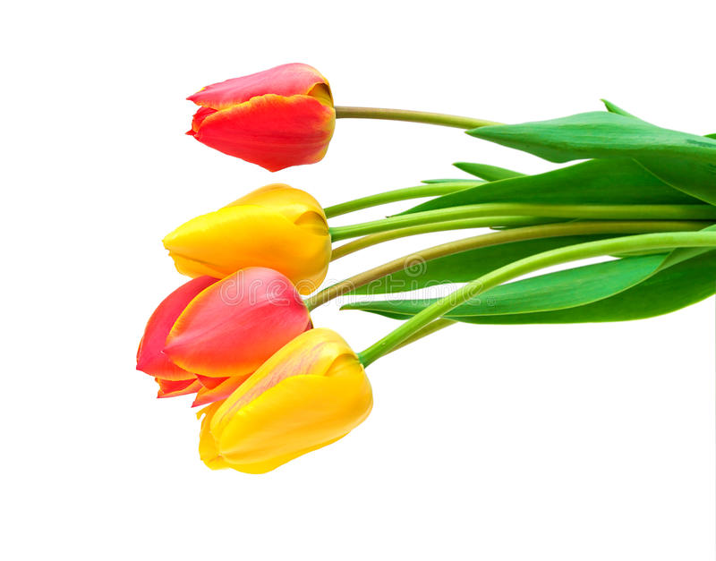 Bouquet Of Tulips On A White Background Royalty Free Stock Image