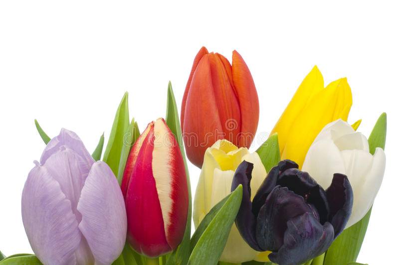 Download Bouquet Of Tulips On White Background Stock Image - Image: 37704335