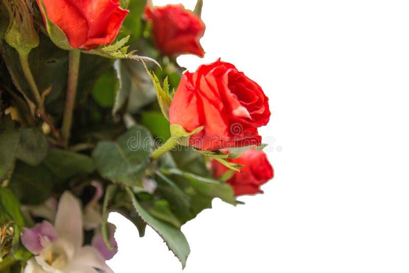 Bouquet van rozen geïsoleerd op witte achtergrond zijaanzicht royalty-vrije stock afbeelding