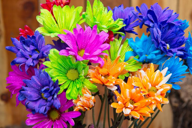 Vibrant purple blue green orange daisies with water drops on the petals stock image