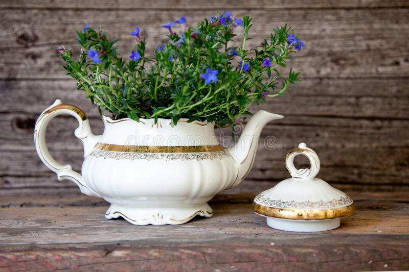 Bouquet of Violet Flowers in White Tea Pot royalty free stock images