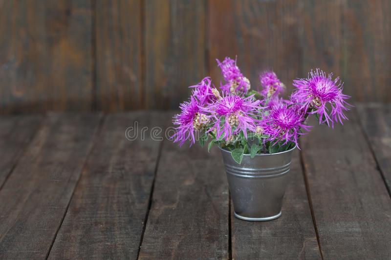 Bouquet of violet knapweed wild flowers in a tin bucket. Centaurea nigra on wooden background royalty free stock image