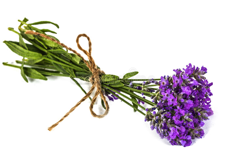 Bouquet of violet wild lavender flowers in dewdrops and tied wit. H bow, isolated on white royalty free stock photo