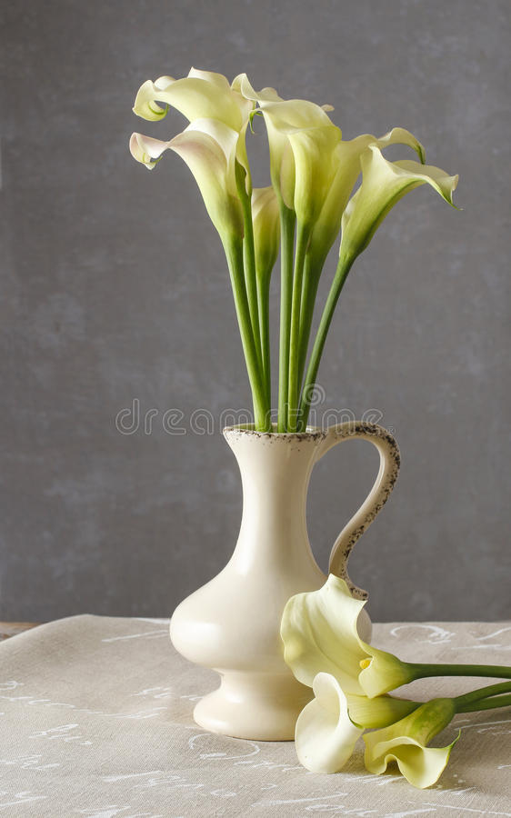 Bouquet of white calla flowers (Zantedeschia) in ceramic vase stock image