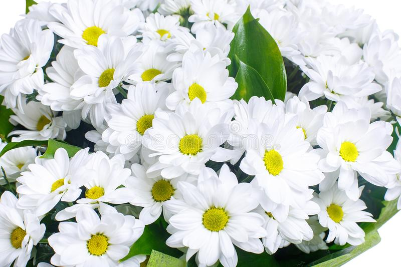 Bouquet of white camomiles, chrysanthemums. stock photo