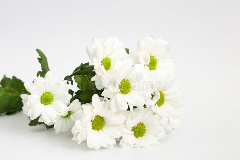 Bouquet of white chrysanthemums isolated on a white background. Plant, daisy, garden, green, yellow, design, petal, bunch, leaves, gift, cut, out, horizontal royalty free stock photo