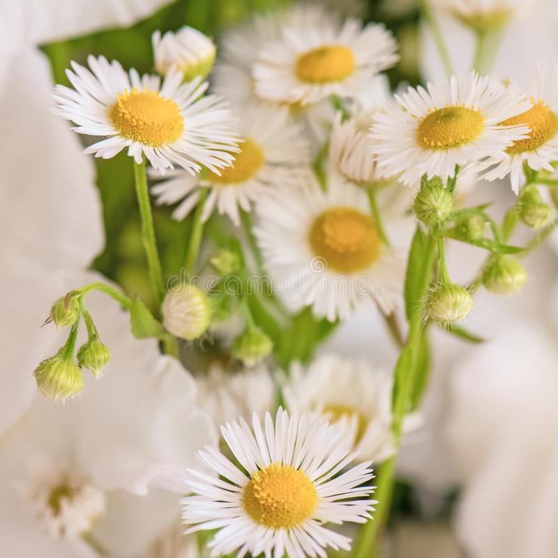 Bouquet of white gladioli. Whiteness delicate gladiolus flowers. Close-up, white background stock photo