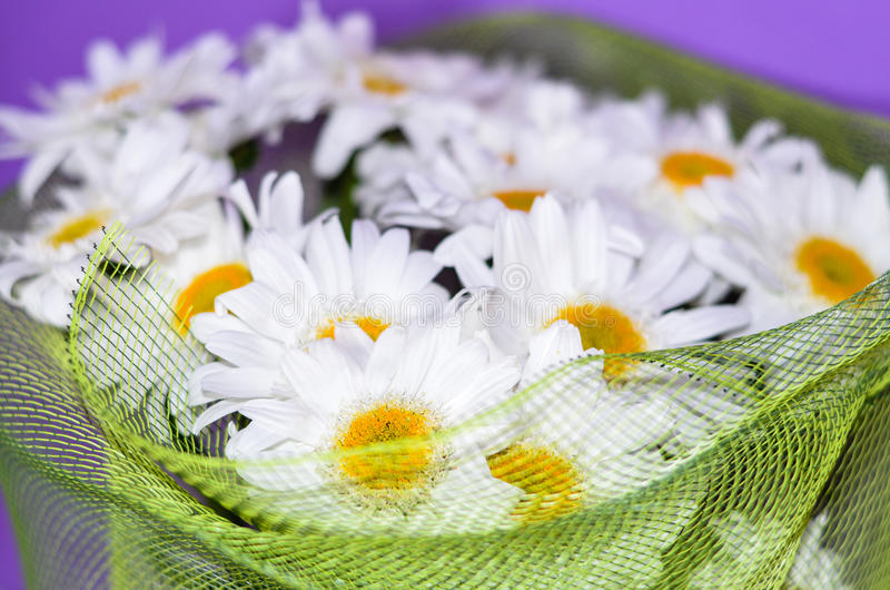 Bouquet of white daisy flowers on a orange background. Bouquet of white daisy flowers on a purple background stock photo