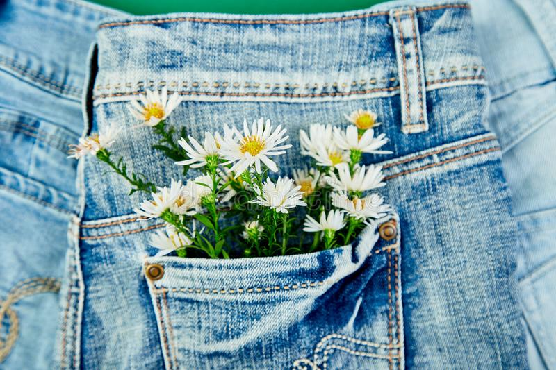 Bouquet of white flower in the pocket of a jeans on green background. Minimalis. Denim concept. Flat lay. Copy space. Creative royalty free stock photos