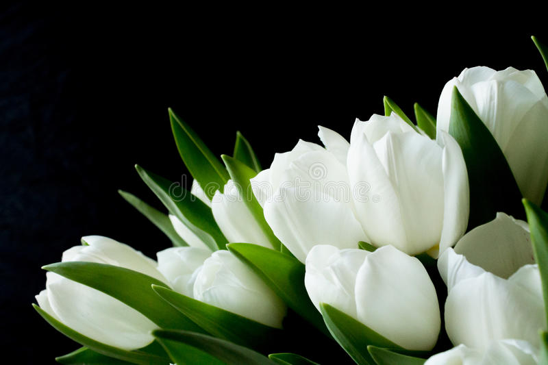 Bouquet of white flowers on a black background stock photo image download bouquet of white flowers on a black background stock photo image of nature mightylinksfo