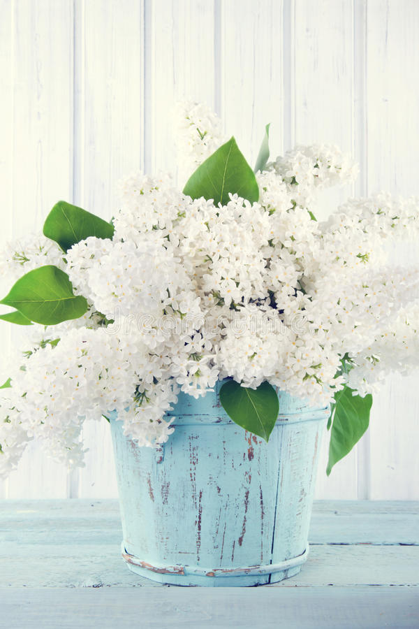 bouquet of white lilacs stock photo image 41341008. Black Bedroom Furniture Sets. Home Design Ideas