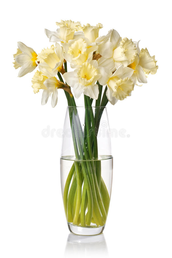 Bouquet from white narcissus in vase. Isolated royalty free stock image