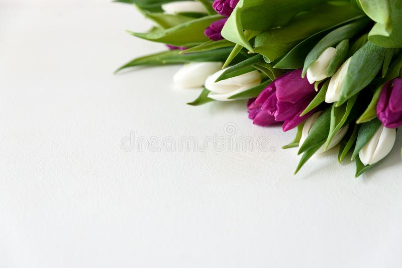 Bouquet of white and purple tulips on white wooden background. Top view. Flat lay. Copy space. Valentines day, mothers day,. Birthday, wedding celebration stock image