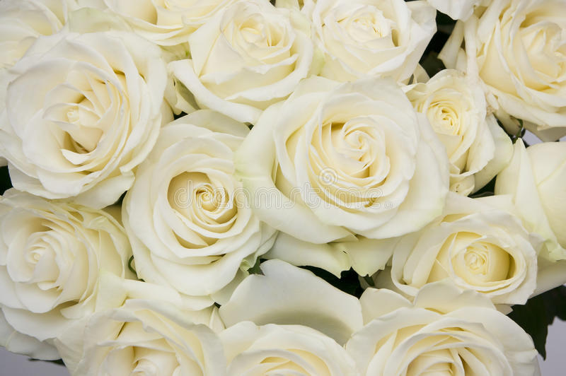 Bouquet white rose closeup royalty free stock image