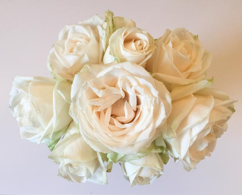 A bouquet of white rose. An up close photo of white roses royalty free stock photo