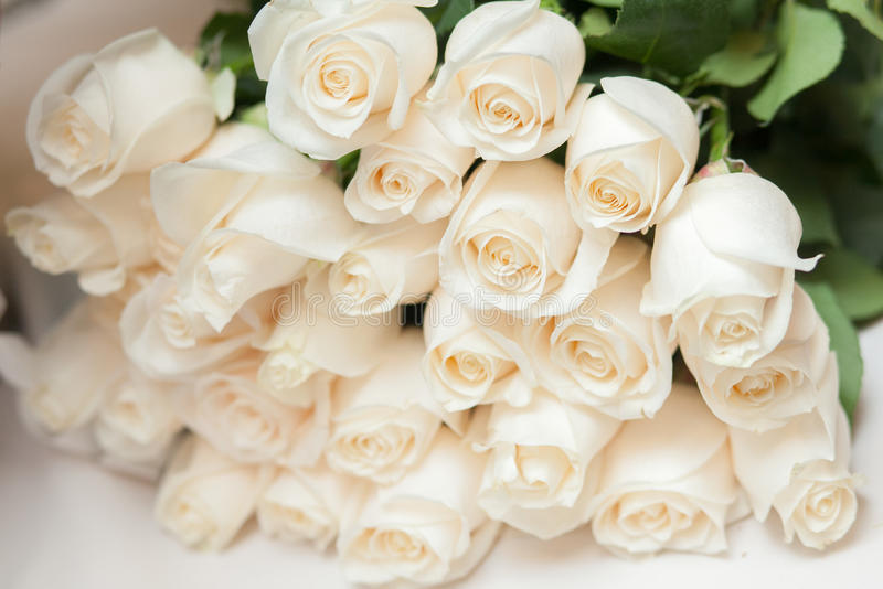 Bouquet of white roses stock photo. Image of pretty, dreamy - 42407284