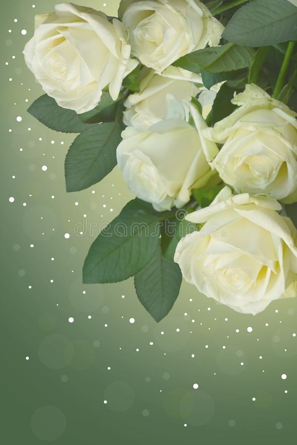 Beautiful white roses on green background. royalty free stock photo