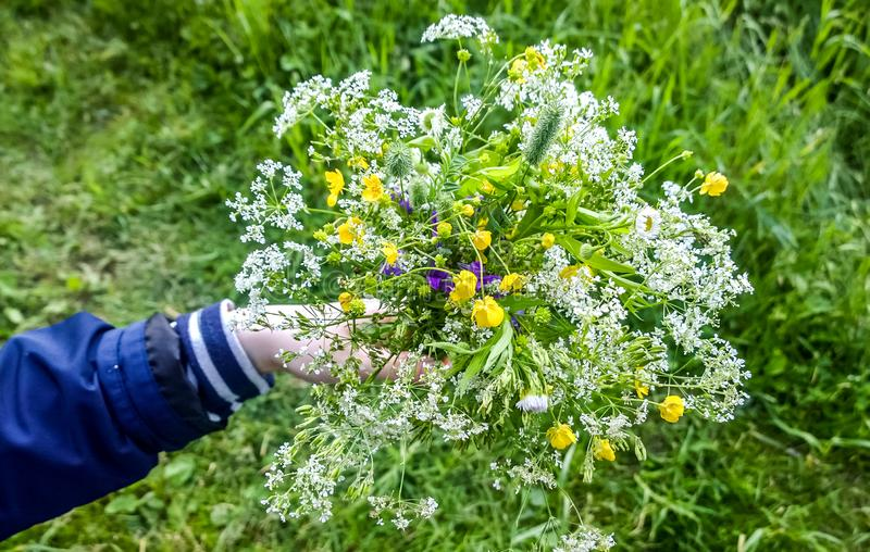 bouquet of wild flowers in hand royalty free stock photos