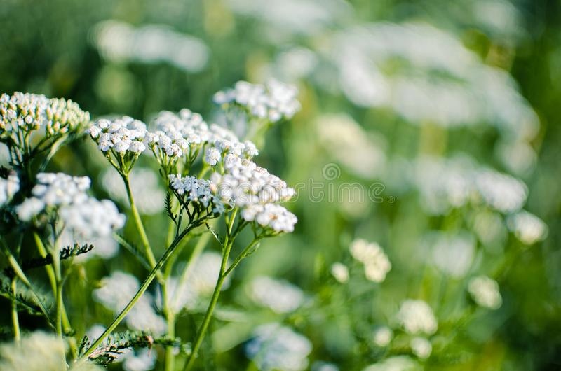 Bouquet of wild flowers of different colors in the vase outdoors royalty free stock image