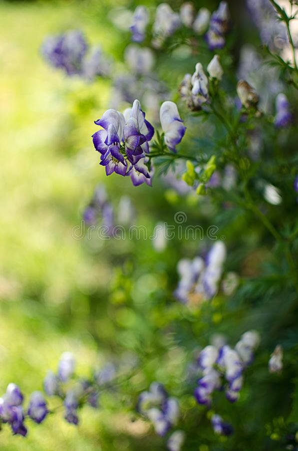 Bouquet of wild flowers of different colors in the vase outdoors royalty free stock images