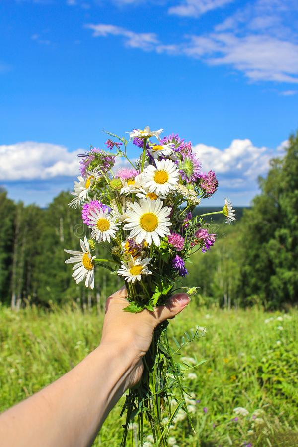 Bouquet of wild flowers in hand against the blue sky. summer mood stock photography