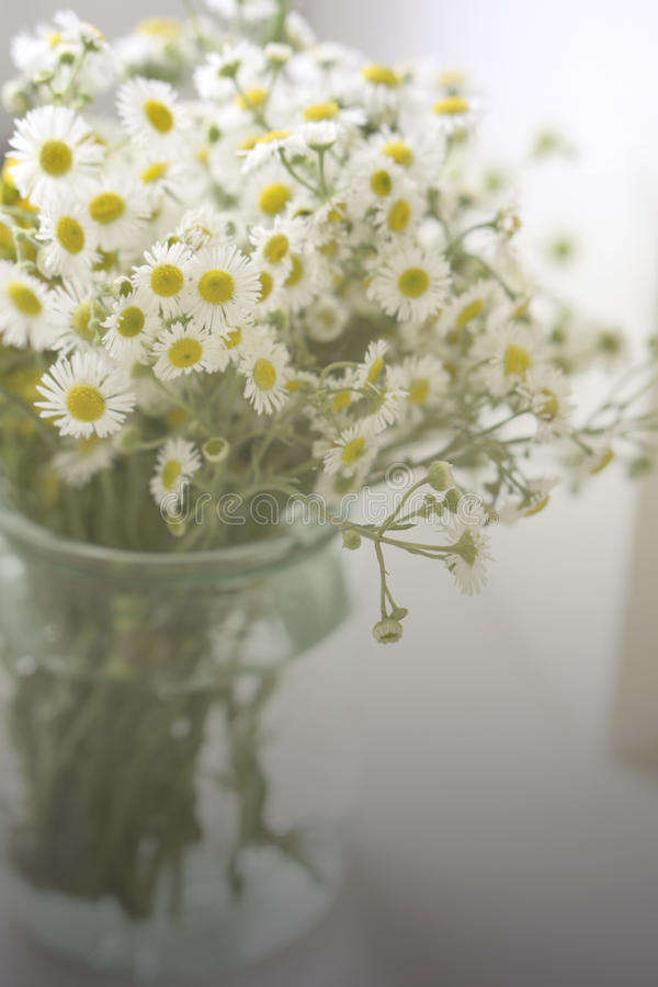 A bouquet of wildflowers camomiles in a glass jar on a table by the window. Vintage tone. A bouquet of wildflowers in a glass jar on a table by the window stock photography