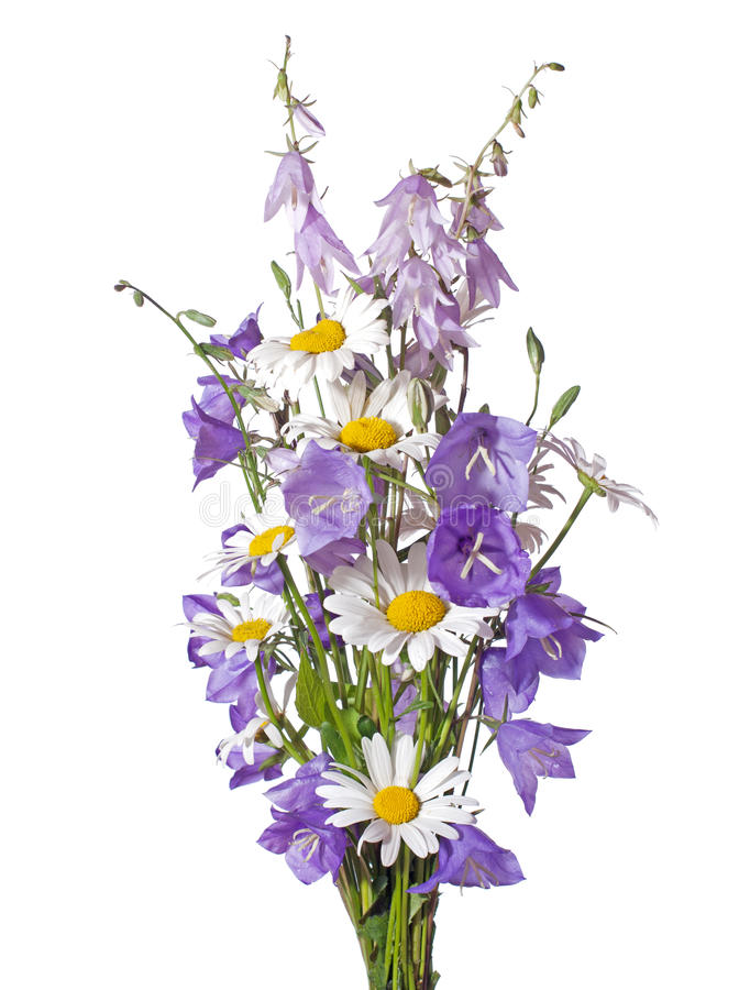 Bouquet of wildflowers stock image