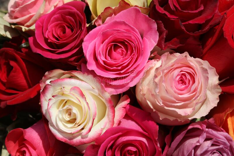 A Bouquet of wonderful different Roses royalty free stock photography