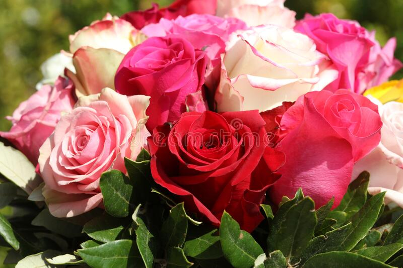 A Bouquet of wonderful different Roses stock image