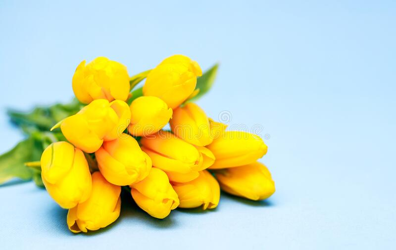 A bouquet of yellow beautiful tulips lies on a blue background. The concept of the holiday is March 8, Women`s Day, Valentine`s stock photo