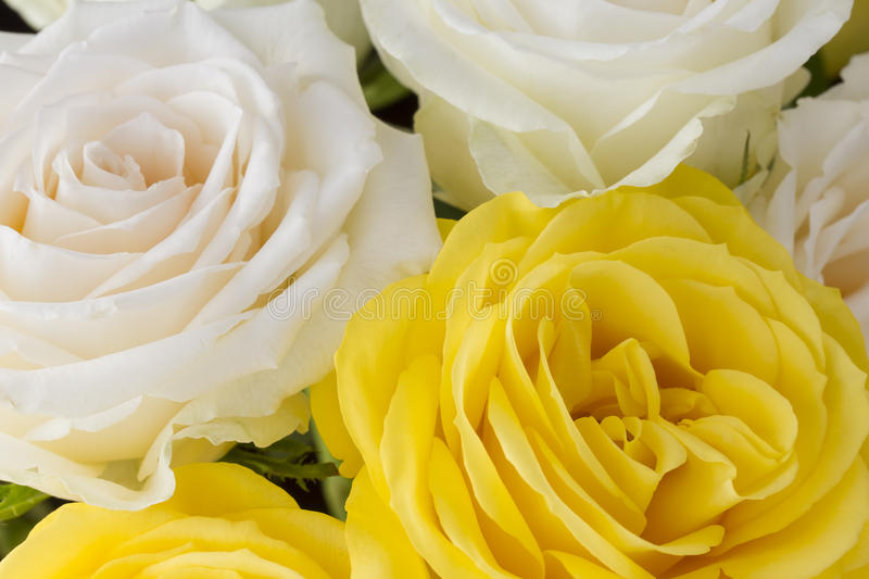 Bouquet of yellow and cream roses royalty free stock images