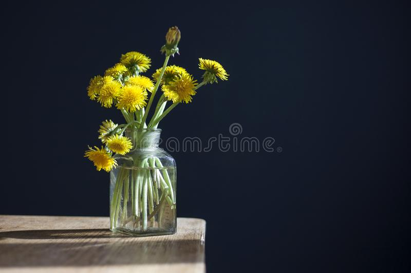 Bouquet of yellow dandelions in a glass transparent jar on a wooden table against the background of a dark blue wall stock images