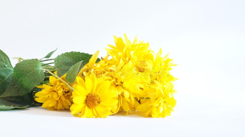 Bouquet of yellow flowers stock photography