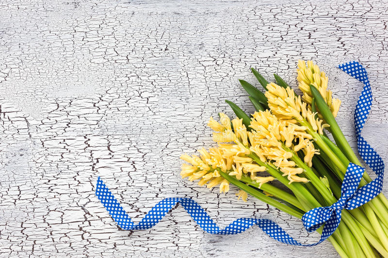 Bouquet of yellow hyacinths decorated with blue ribbon on white background. Top view royalty free stock photos