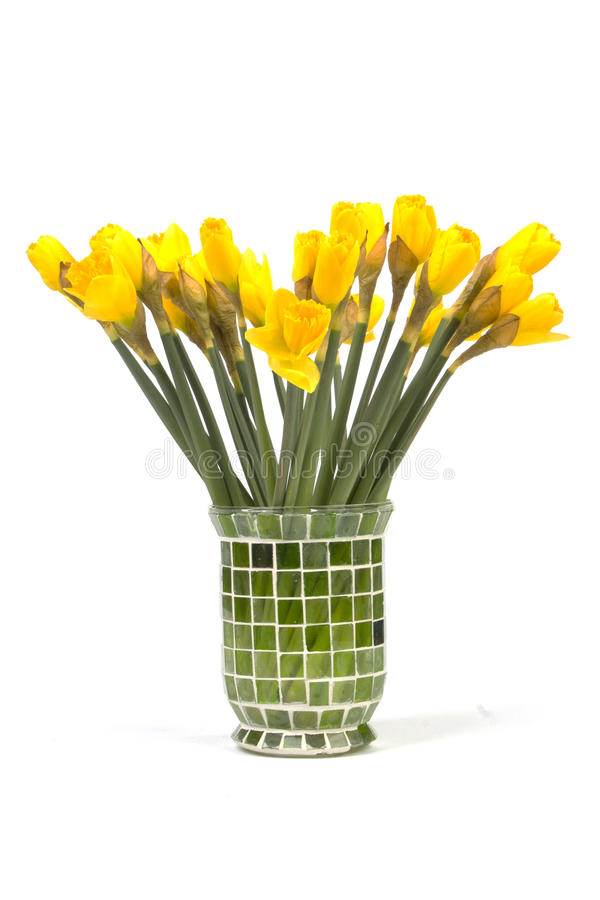 Bouquet of yellow lent lily (daffodil) isolated on white royalty free stock images